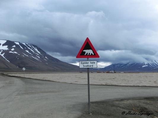 Warnung vor dem Eisbär - Gilt auf ganz Svalbard