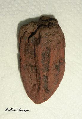 Koralle (evtl. Skolithos)   4 cm hoch