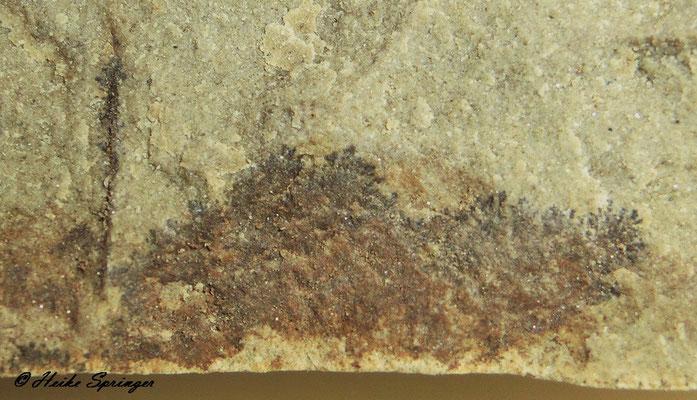 Pflanzliches Pseudofossil ( Moos- oder baumförmig flächige Ablagerungen von Mangan(IV)-dioxid oder Eisen(III)-oxid (Dendriten)
