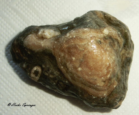 Stromatopore