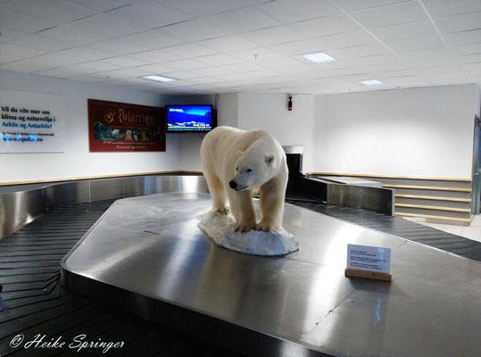 Hier wird man schon vom ersten Eisbären begrüßt