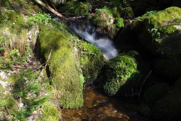 Einsamer Bergbach-den musste das Tannenmoggele überqueren