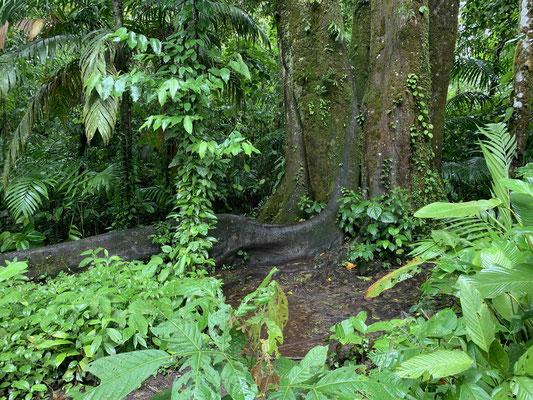 Die vorherrschende Farbe in Costa Rica: GRÜN (kennt ihr das Lied: Grün grün grün sind alle meine Kleider, grün grün grün ist alles was ich hab. Darum lieb ich alles was so grün ist, weil ....