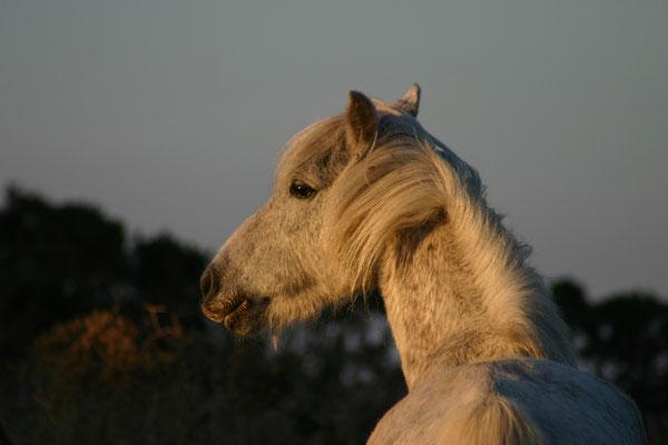 Pferd - Südengland