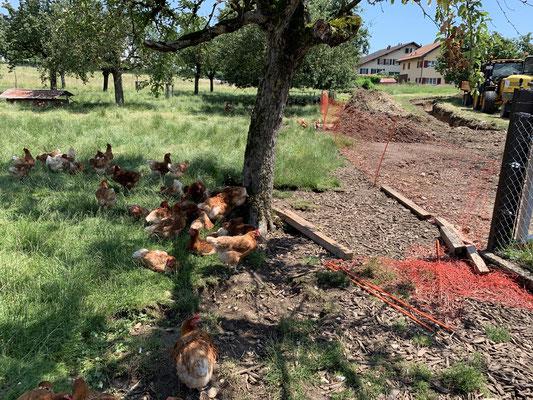So sollten es alle Hühner und anderen Tiere haben.