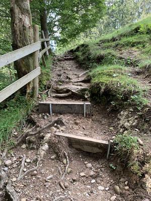 Dann führt uns Komoot zurück in die Natur... Wir fragen uns, wer diese Single-Trails aufwärts fahren kann.