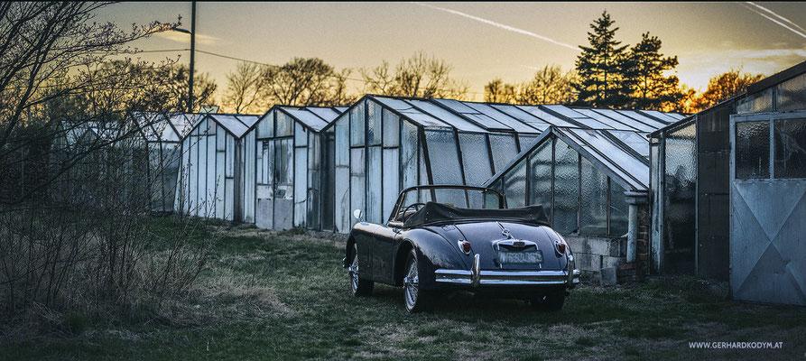 Jaguar XK150 (c) GerhardKodymPhotography