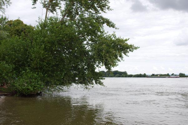 """""""Unser Busch"""" 2016 voll im Hochwasser"""