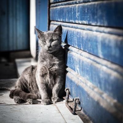 Essaouira Town cat