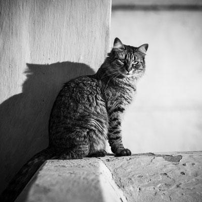 Cat in Marrakech