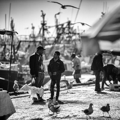 Essaouira port discussion