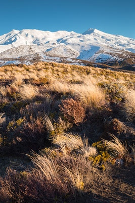 Mount Ruapehu im Tongariro Nationalpark in Neuseeland (c) Salomé Weber