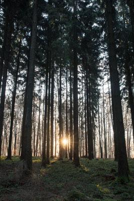 Urlaub in Deutschland: Wintermorgen im Westerwald. (c) Salomé Weber