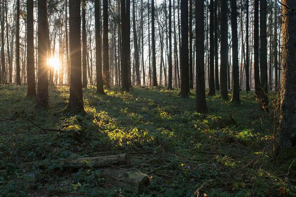 Urlaub in Deutschland: Sonnenaufgang im Westerwald. (c) Salomé Weber