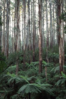 Yarra Valley, Australien (c) Salomé Weber