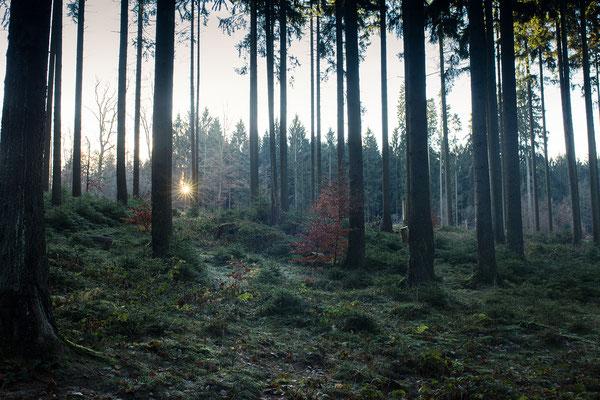 """Sonnenaufgang in einem Waldgebiet im hessischen """"Hinterland"""". (c) Salomé Weber"""