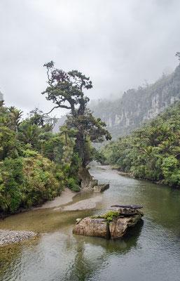 Eindruck vom Paparoa River Walk.
