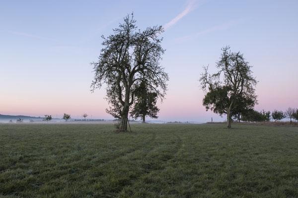 Wiesen und Felder prägen die Landschaft in der Mitte Deutschlands. Dieses Foto ist am Rande des Hunsrück Nationalparks entstanden. (c) Salomé Weber
