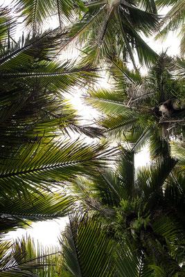 Palmenblätter.