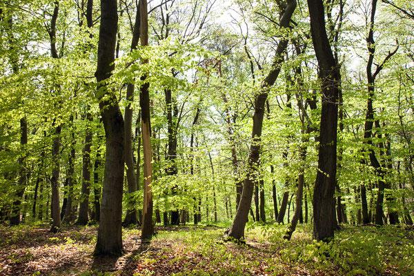 Urlaub in Deutschland: Der Nationalpark Kellerwald-Edersee ist einer der letzten naturnahen Buchenwälder des westlichen Mitteleuropas. (c) Salomé Weber