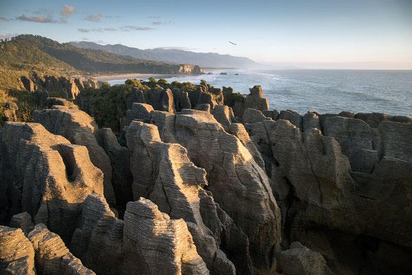 Die Pancake Rocks gehören zu den beliebtesten Sehenswürdigkeiten an der Westküste und das zu Recht.