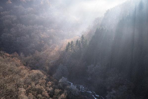 Urlaub in Deutschland: 410 Kilometer Wanderweg durchziehen den Hunsrück Nationalpark. (c) Salomé Weber
