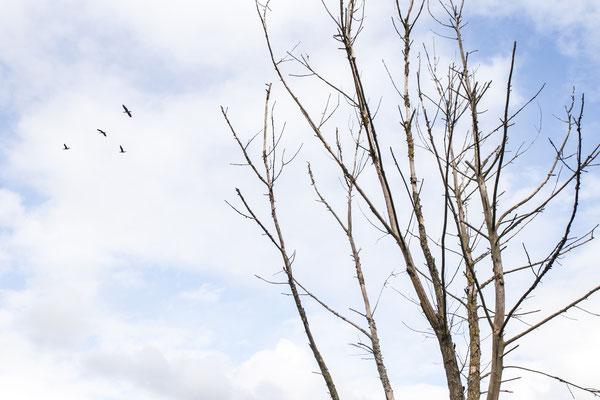 Urlaub in Deutschland: Zugvögel verlassen Deutschland im Herbst, um in wärmeren Ländern zu überwintern. (c) Salomé Weber