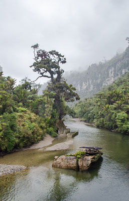 Regenwald im Paparoa Nationalpark, Neuseeland (c) Salomé Weber
