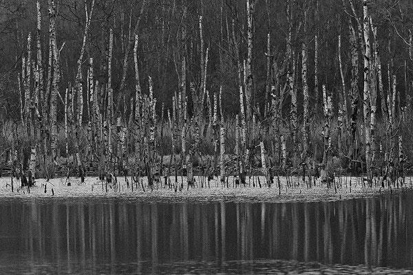 Hohes Moor Bremervörde Herbst abgestorbene Birken mit Spiegelung im Moorsee