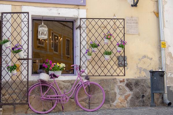 rosa Fahrrad vor Fenster in Szentendre in Ungarn