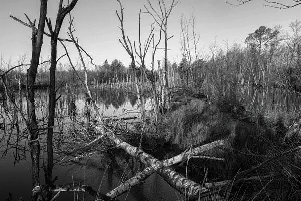 Hohes Moor Bremervörde Bäume umgestürzt wie ein X