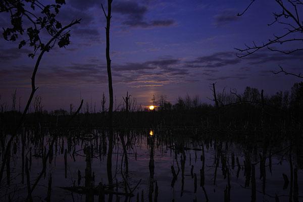 Hohes Moor Bremervörde Mondaufgang