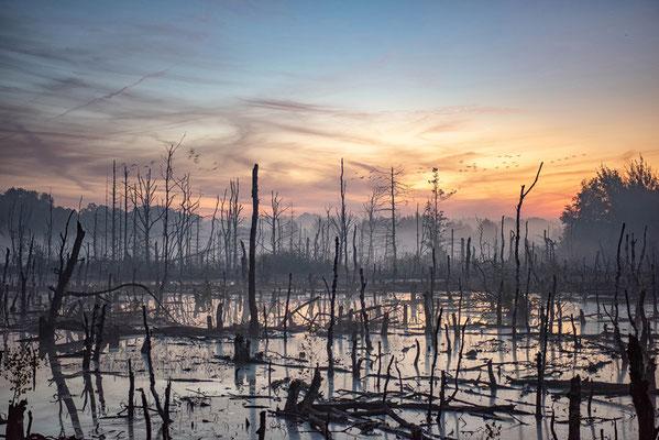 Hohes Moor Bremervörde Sonnenaufgang abgestorbene Birken