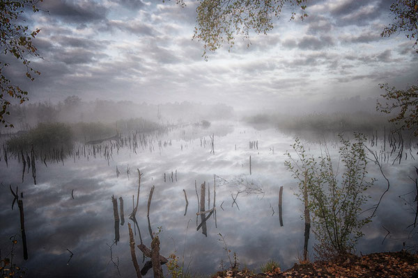 Hohes Moor Bremervörde Herbst morgens im Nebel