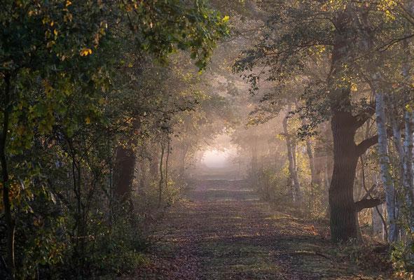 Hohes Moor Bremervörde Sonnenaufgang Weg mit Nebel im Gegenlicht wie Tunnel