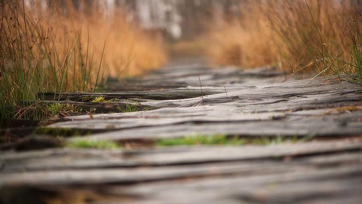 Huvenhoopsmoor Bremervörde Herbst Bohlenweg mit Gräsern