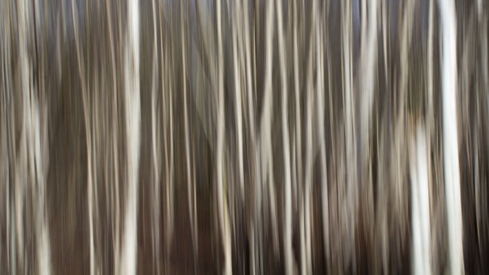 Moorfarben im Februarlicht. Huvenhoopsmoor.
