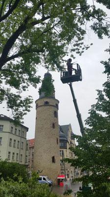 Baumpflegeschnitte