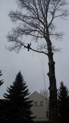 Kletter- Seilarbeiten