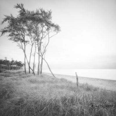 west beach | darß | germany 2018