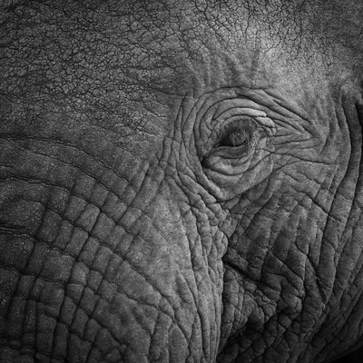 in the eye of an elephant   kapama game reserve   south africa 2016