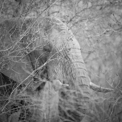 elephant | kapama | south africa 2016