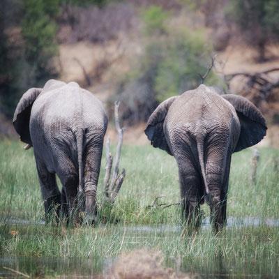 makgadikgadi pans national park | botswana 2017