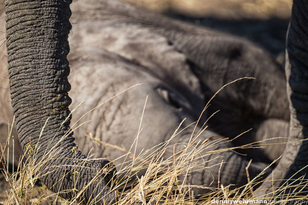 elephant with cub | chobe riverfront | botswana 2014