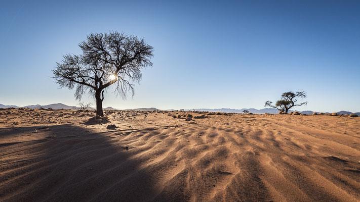 farm kanaan | namib naukluft park | namibia 2015