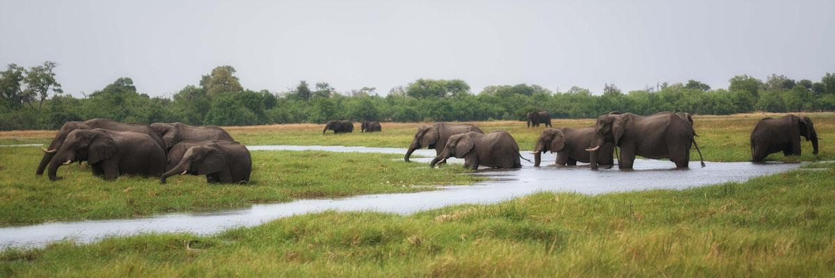 elephants | khwai concession  | botswana 2017