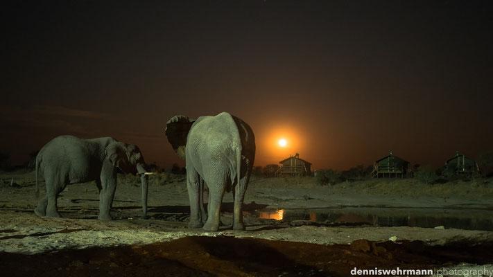 elephant sands | moonshine | botswana 2014