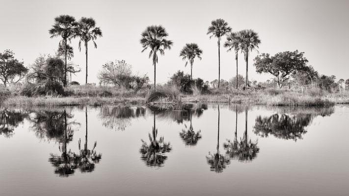 reflections  | chief`s island okavango delta | botswana 2014