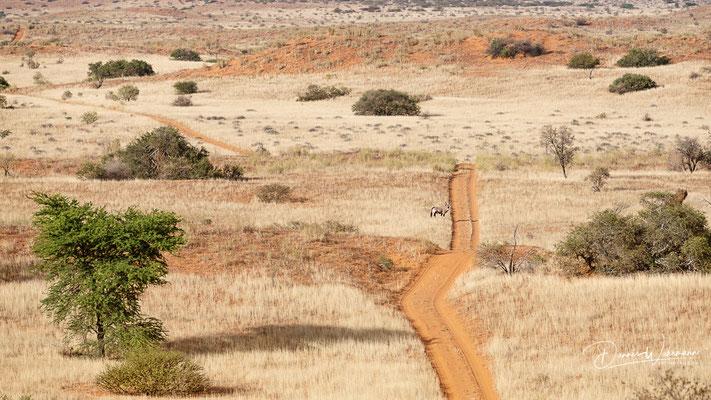 oryx | kgalagadi transfrontier park | botswana 2018