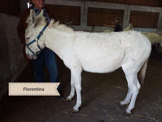 Florentina wird beurteilt